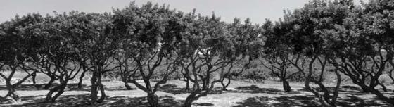 mastihodedro1801