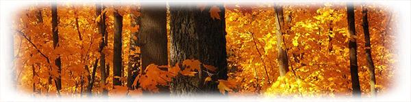 fall2_1