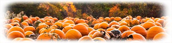 fall4_1